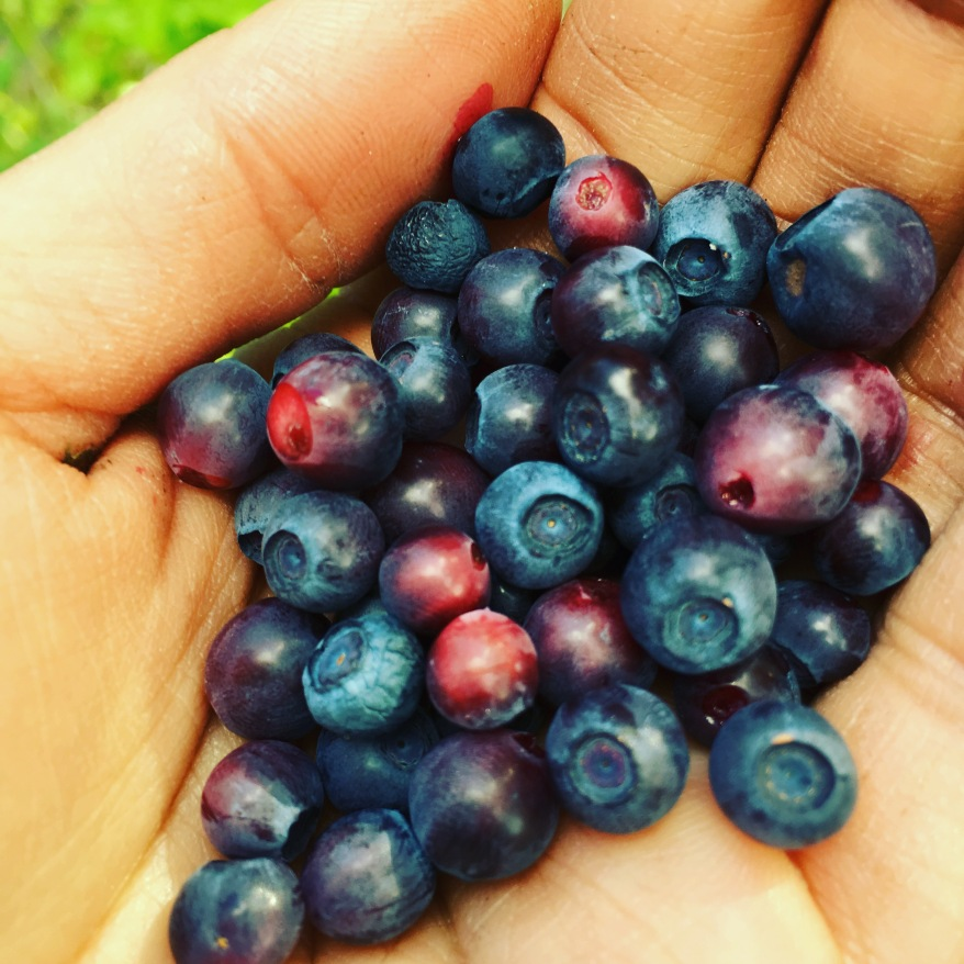 Huckleberries are the site
