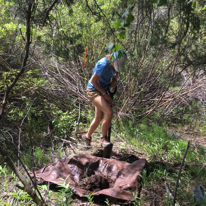 Kinzie installs soil sensors